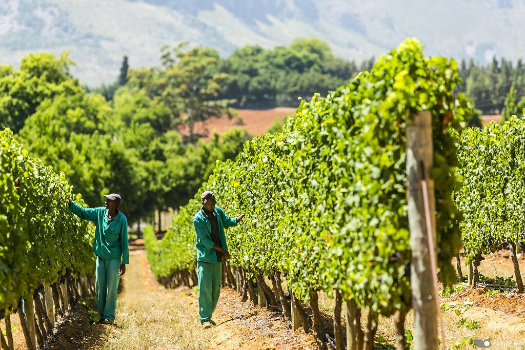 Delaire Graff Wine Estate